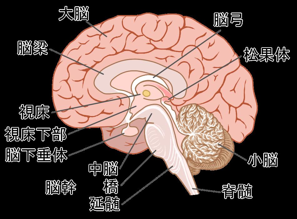 更年期障害と脳の関係