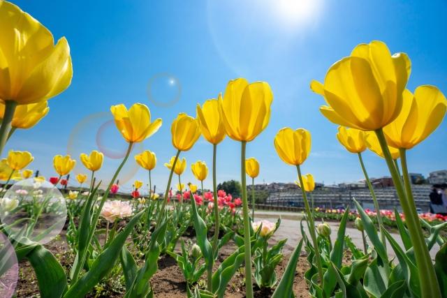 春は気圧変動で自律神経が乱れる